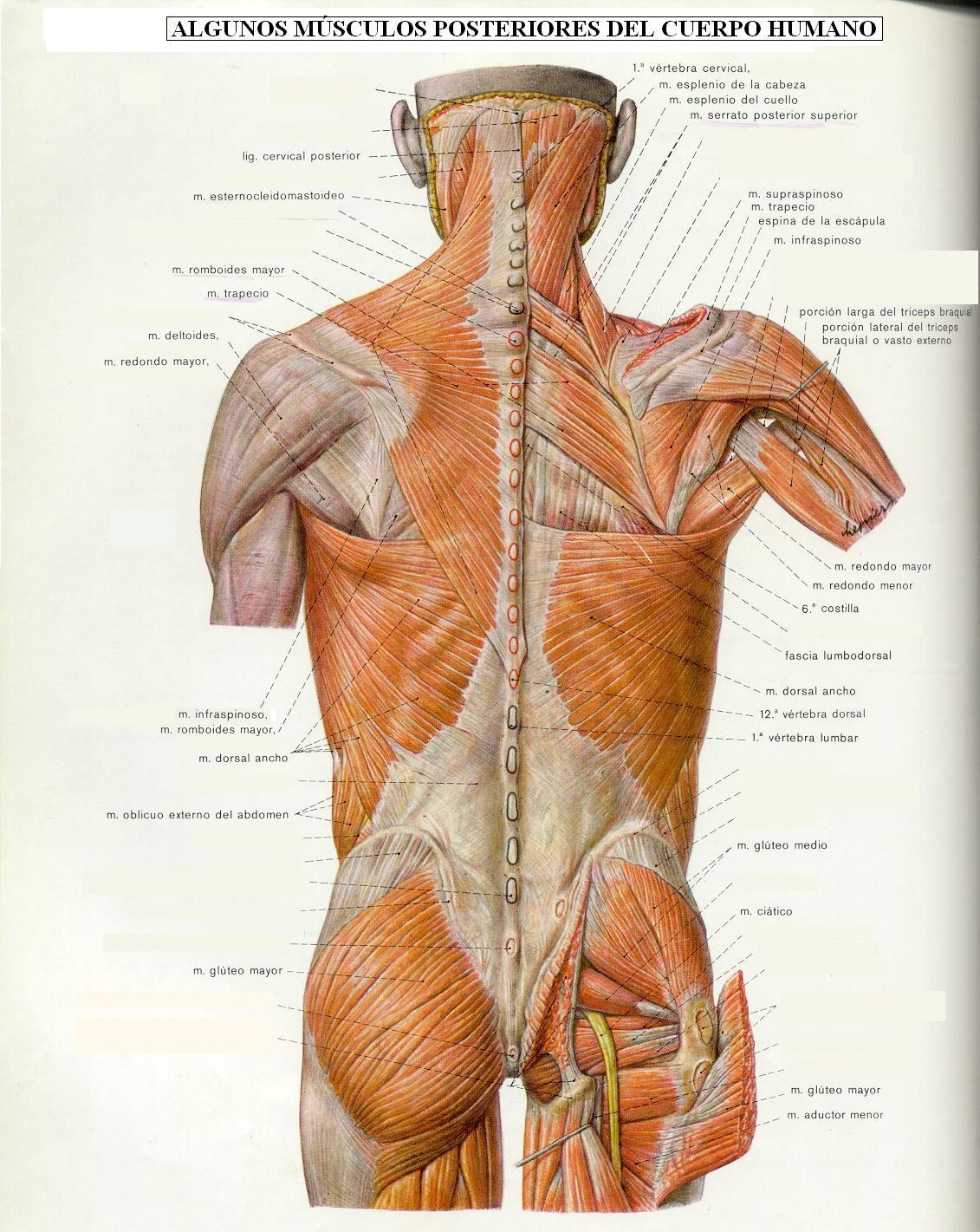 tema1_salud_y_actividad_fisica